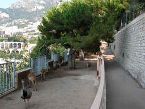 Zoo de Monaco (image google)