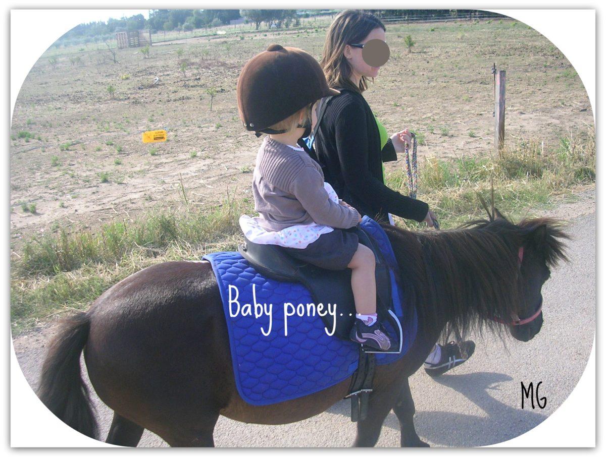 baby_poney